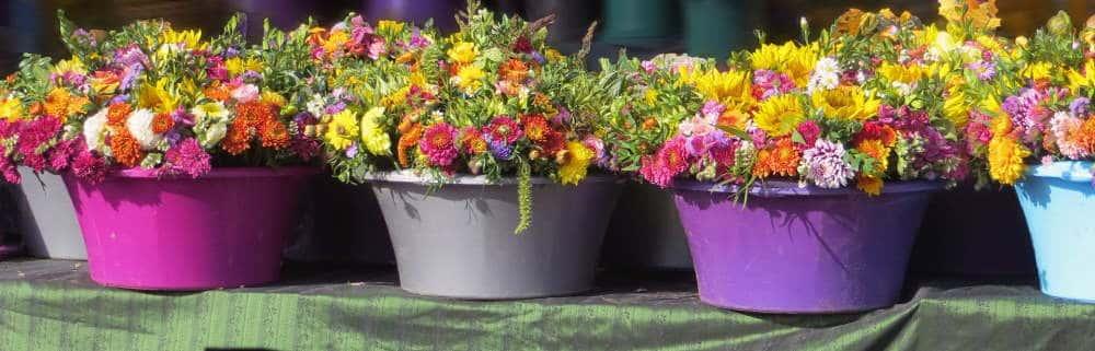 trei ghivece cu flori colorate pe pervaz