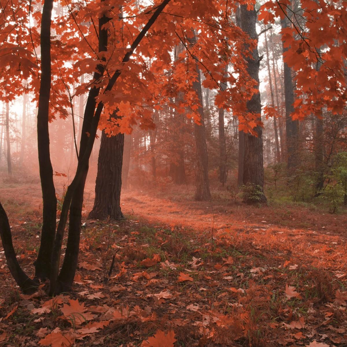 Foto tapet 3D Misty Forest, Dimex, 5 fâșii, 375 x 250cm