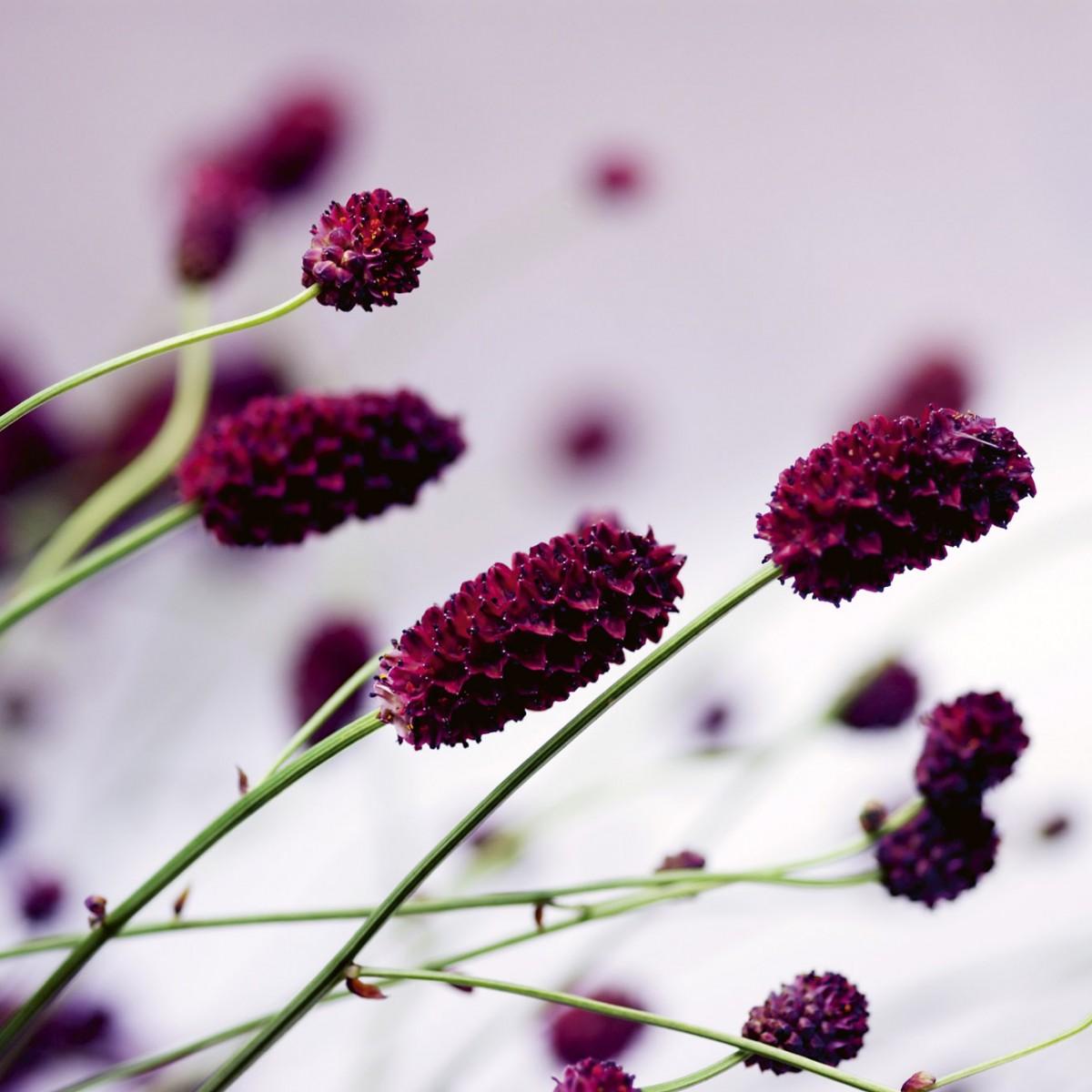 Foto tapet 3D Floral Violet, Dimex, 5 fâșii, 375 x 250cm