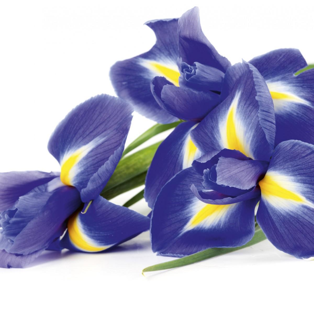 Foto tapet 3D Iris, Dimex, 5 fâșii, 375 x 250cm