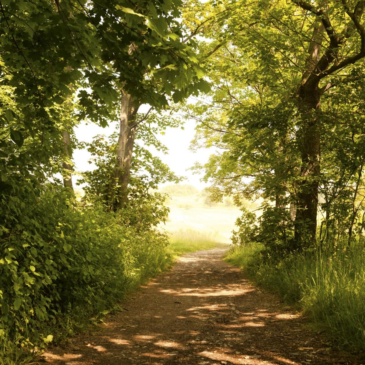 Foto tapet 3D Forest Path, Dimex, 5 fâșii, 375 x 250cm