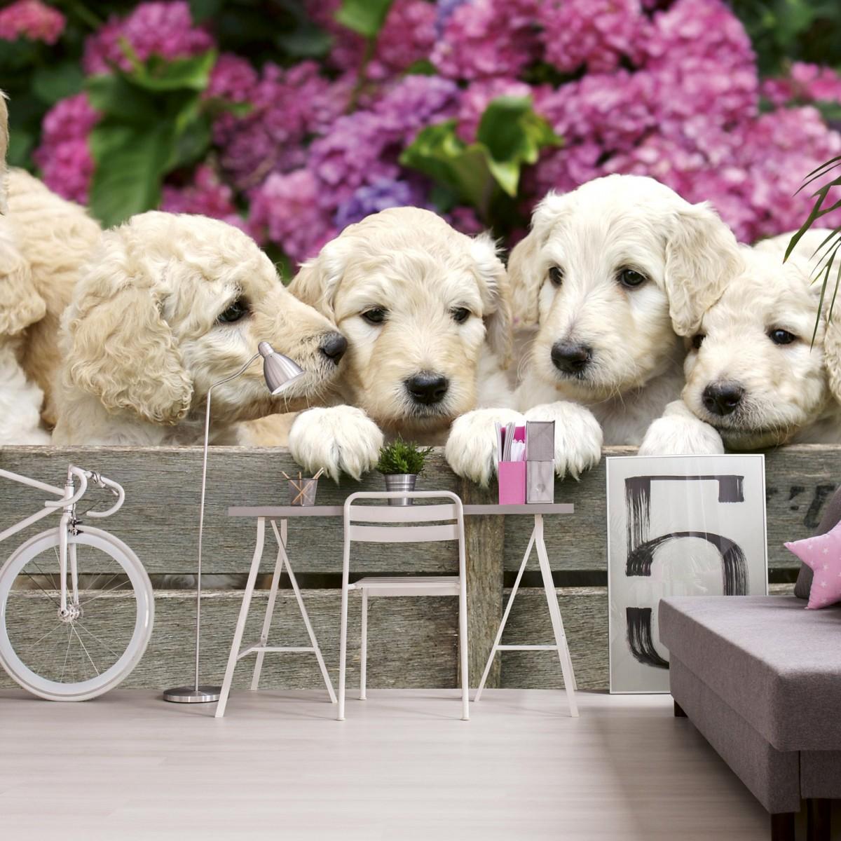Foto tapet 3D Labrador Puppies, Dimex, 5 fâșii, 375 x 250cm