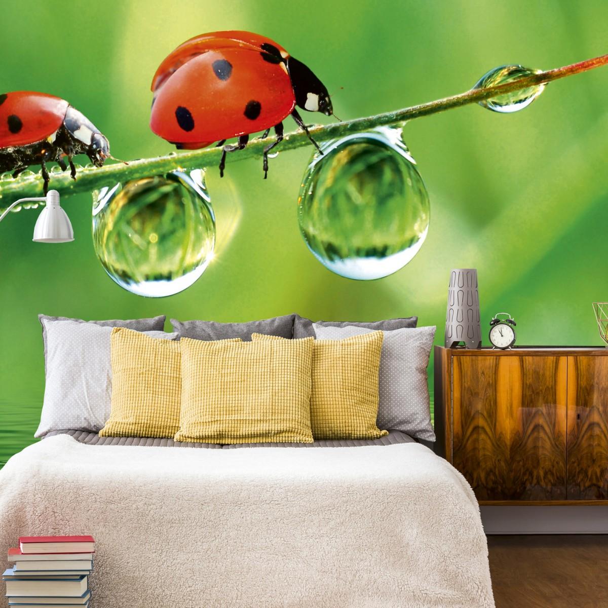 Foto tapet 3D Ladybird, Dimex, 5 fâșii, 375 x 250cm