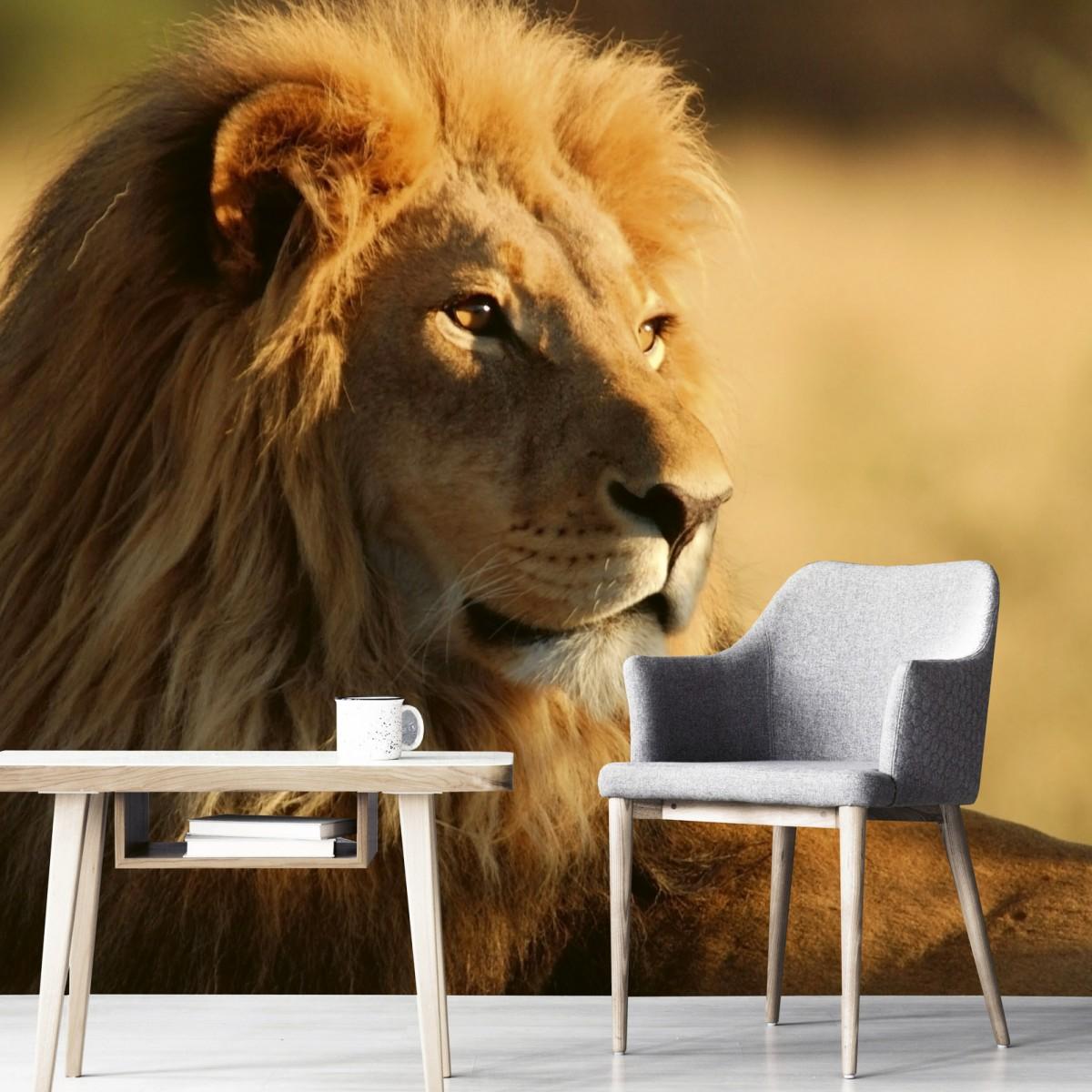 Foto tapet 3D Lion, Dimex, 5 fâșii, 375 x 250cm