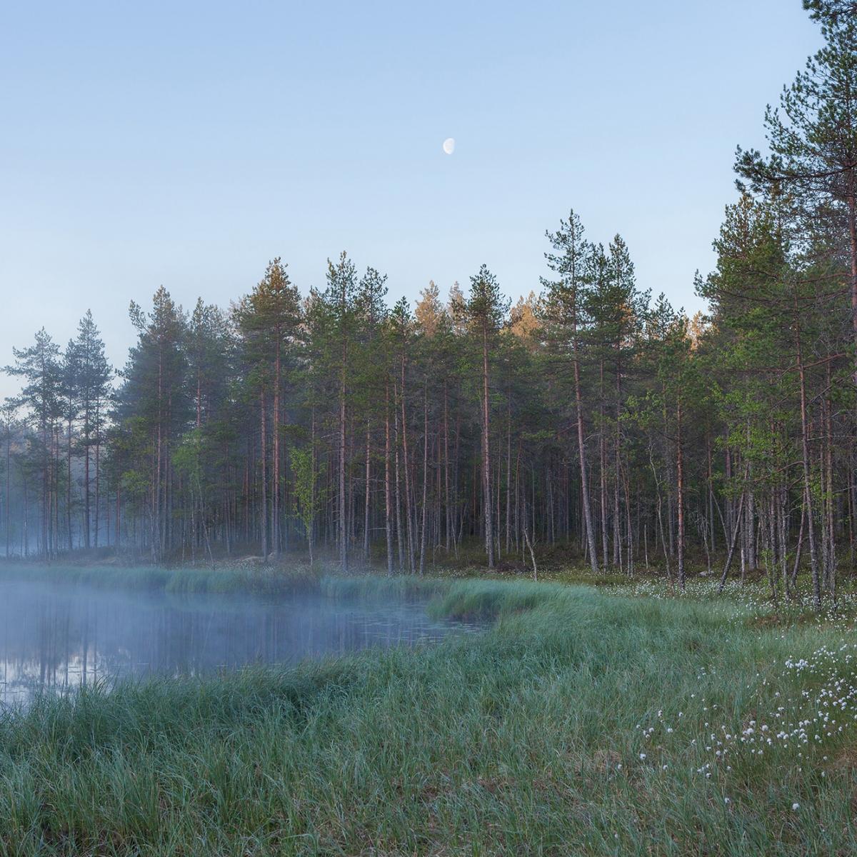 Fototapet Forest Lake, personalizat, Rebel Walls