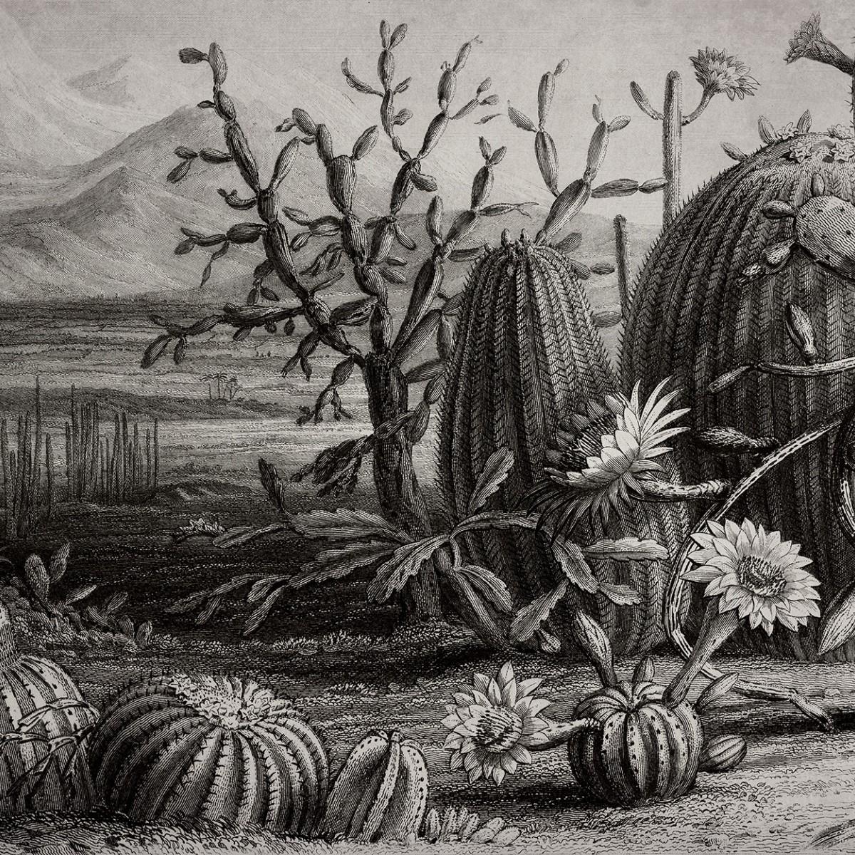 Foto tapet Cactus Garden, personalizat, Rebel Walls