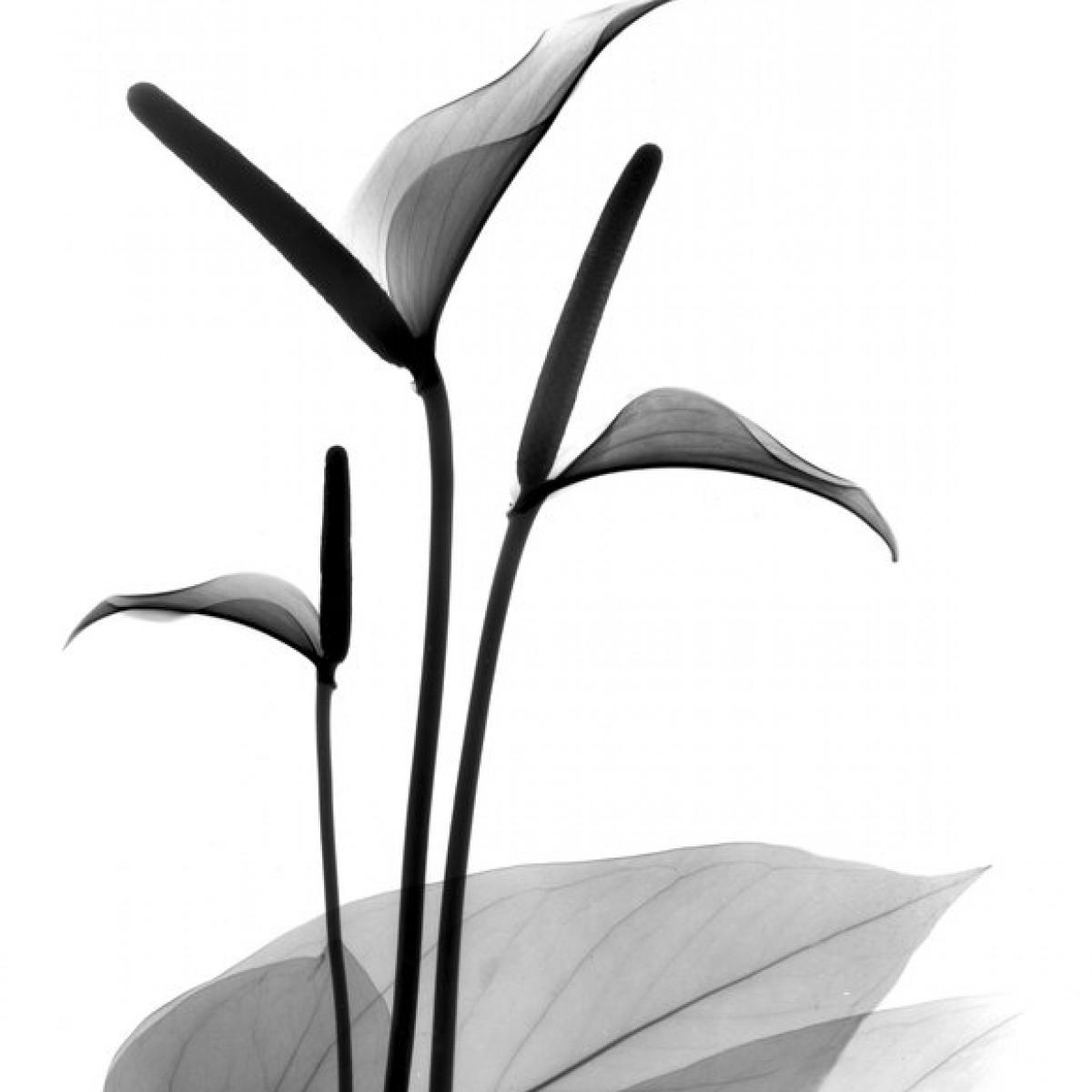 Fototapet Flamingo Flower, personalizat, Photowall