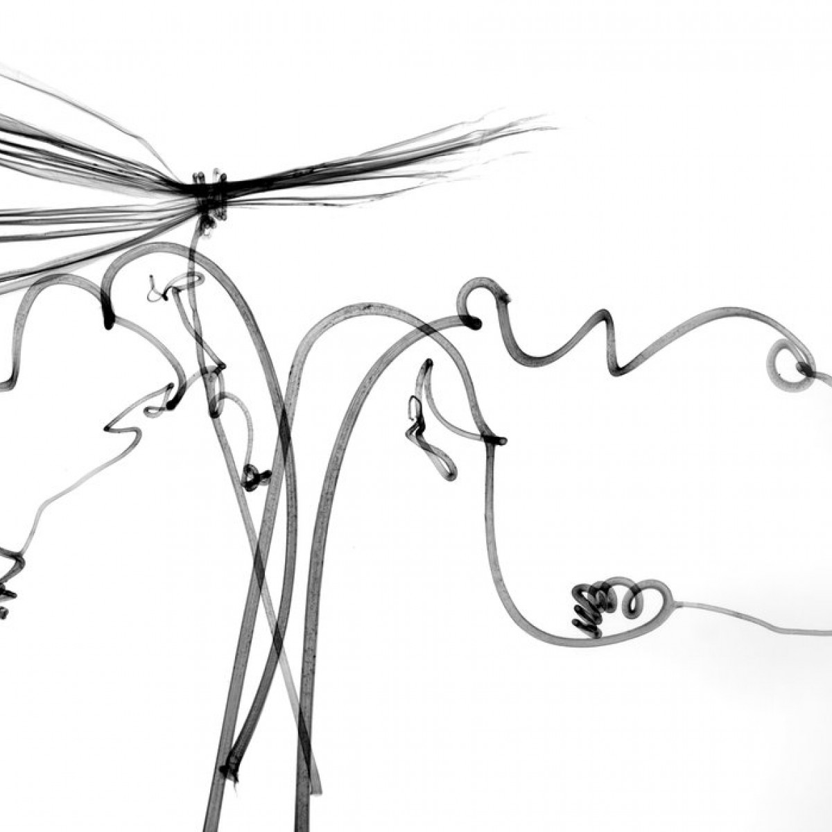 Fototapet Dragonfly, personalizat, Photowall