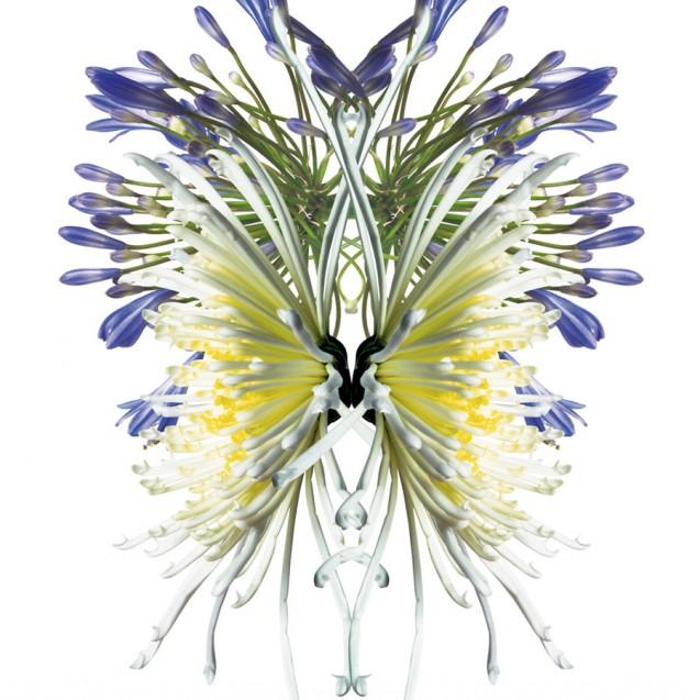 Fototapet Wildflower 1, personalizat, lavmi